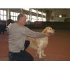 Дрессировка и коррекция поведения собак