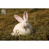 Мини-фермы для разведения кроликов-акселератов («Белый великан» и «Серебристый») !